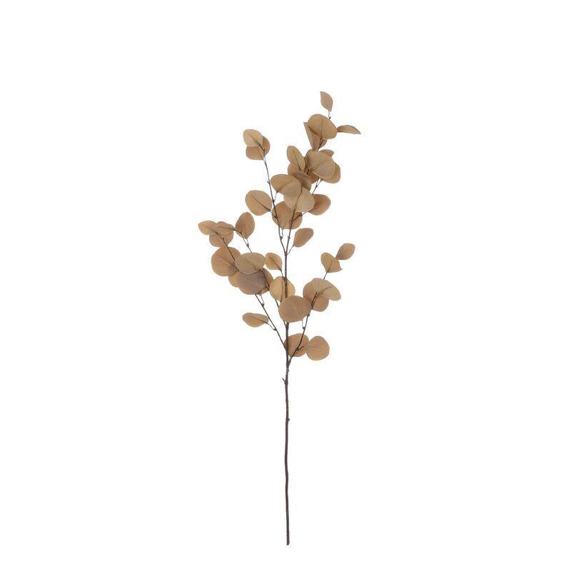 Eucalyptus bruin l97cm